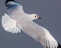 Seagull Show