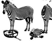 6 Zebra Deaths