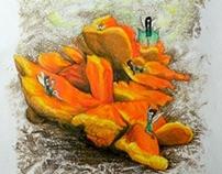 Faeries & Fungi