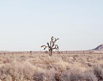 A Landscape 2