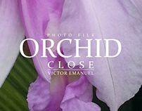 Orchid Close - Photo File Project