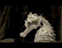 I heart the elusive seahorse
