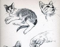 Art Work :: drawings