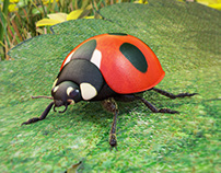 Joaninha (Ladybird) 3D
