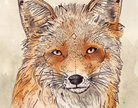 Animal Illustrations