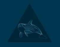 * Wild Whale * ArtPrint