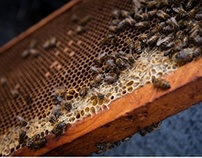 Apiculture Guadeloupe