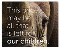 Phinda Rhino Ad Campaign