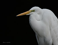 WILD BIRDS IN HAKENOMIYA, KUMAMOTO CITY