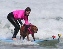 Ricochet the Surf Dog's Always Sunny Story