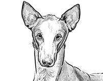 Sighthound Drawings