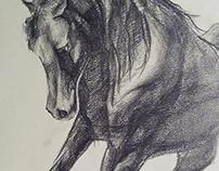 sketch, horse