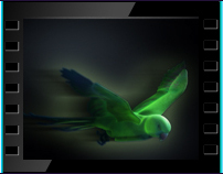 CG Animation of Parrot 02