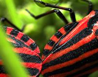Bugs' sex