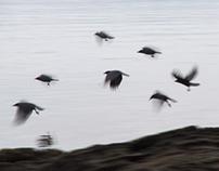 Birds Motion Study