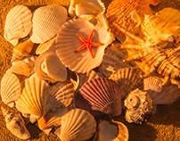 Emma's Shells