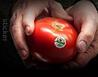 Mežvidi | Tomatoes Manufacturer