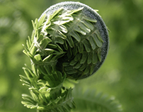 FERN - In Color and in Black and White