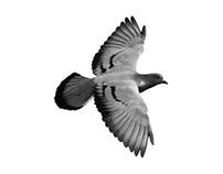 // fly lisbon