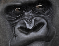 Gorilla Study