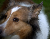 Pet Photography 2014/2015