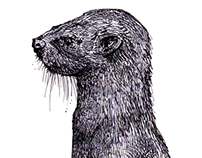 The Upright Otter