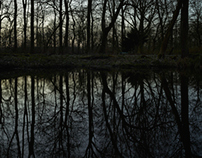 Swamp and Darkness