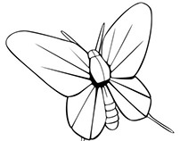 Paper Butterfly Icon