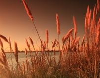 Alameda Shoreline