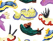 Nudibranchs!