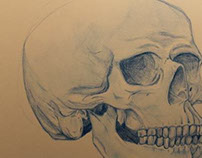 Human Anatomy Study Part 1: Skull