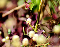 Miniature Nature