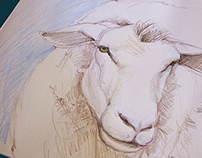 Sketch of a beautiful sheep - tribute to ...