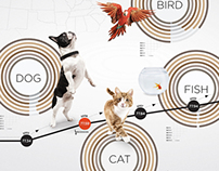 USA Pets Data Visualization