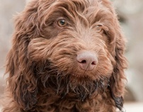My Canine Companion 2012