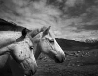 Himalaya & Horses