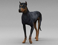 Doberman Realistic Walk Cycle