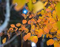 Fall Sights in Oregon