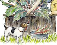 Harvesting the Rhubarb