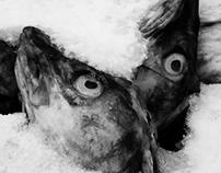 Lofoten, UNESCO world heritage site candidate