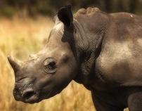 Rhinoceres Calf