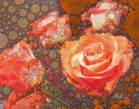 Rose 001 color