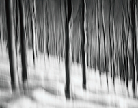 Winter Forest ~ Spacial Acoustics