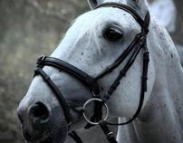 Los caballos de San Juan Totoltepec