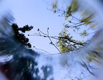 Spring [loop]