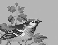Pixel Art - Birds