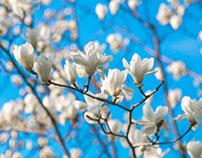Xuanwu Spring