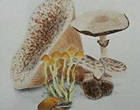 Session mushrooms