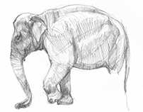 Sketchbook - Mammals