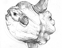 Sketchbook - Fish